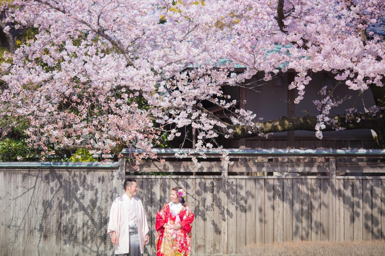 桜 ロケーション 花嫁 新郎新婦 和装 3月 4月