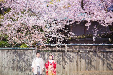 春婚プレ花嫁様向け♡新潟でする「桜ロケ×和装フォト」まとめ♡