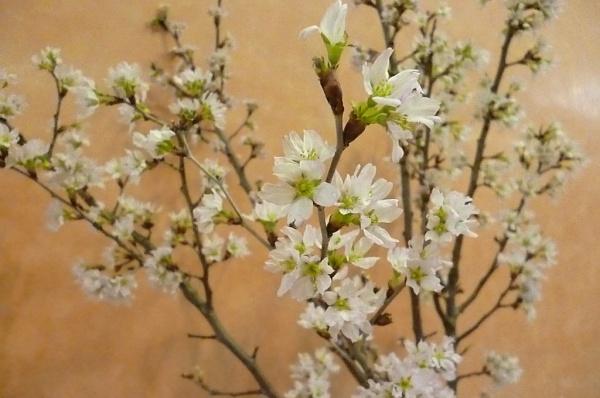 桜の季節❀